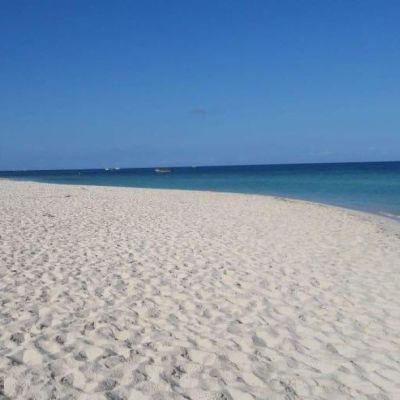 Eliminamos sargazo en Cancún, Puerto Morelos e Isla Mujeres, afirma Semar