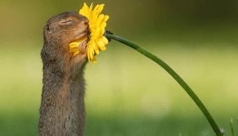 Foto El origen de la imagen viral de una ardilla oliendo una flor 10 septiembre 2019