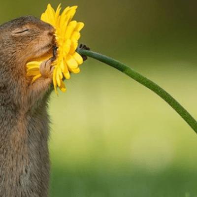 El origen de la imagen de una ardilla oliendo una flor, que se volvió viral