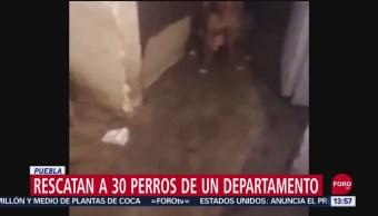 FOTO: Autoridades Rescatan 30 Perros Que Eran Maltratados Puebla