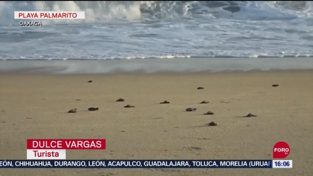FOTO: Campamento tortuguero en Playa Palmarito, Oaxaca, 14 septiembre 2019