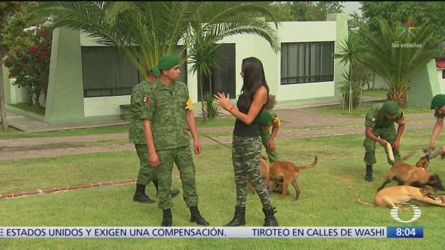 Cómo entrena Sedena a perros de rescate y detección de narcóticos