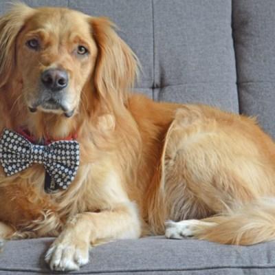 'Perro doctor' ayuda en la terapia de niños con autismo