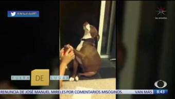 Fuera de Lugar: Perrito se hace el desmayado