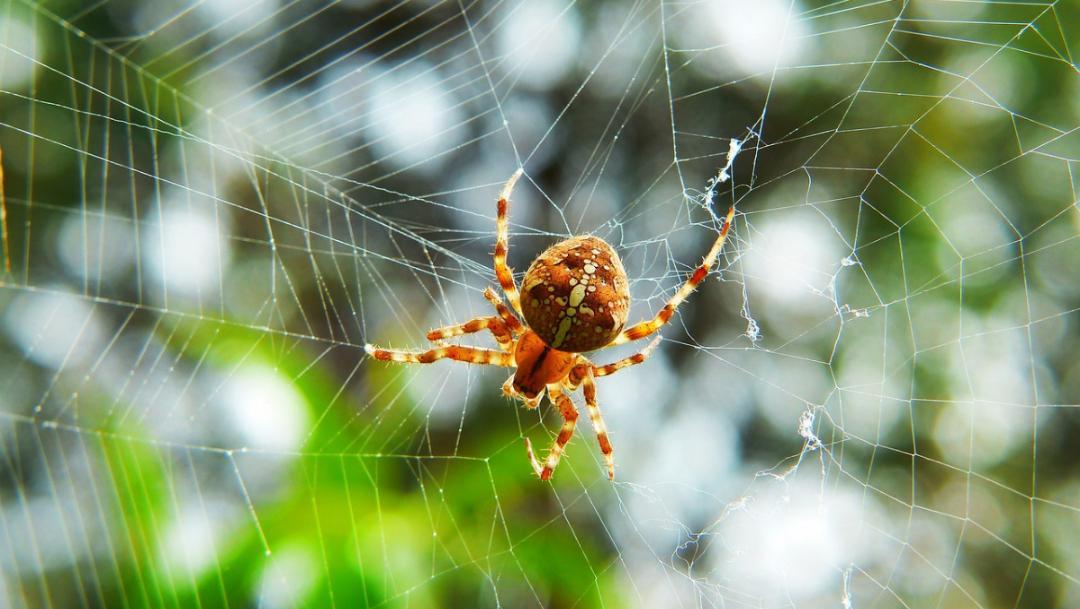Foto:Araña con telaraña para plastico biodegradable. 18 septiembre 2019