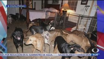 """Mujer protege 97 perros al paso del huracán """"Dorian"""""""