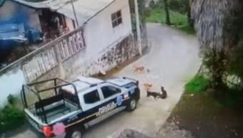 Foto Patrulla atropella y mata a perrito en Edomex 3 septiembre 2019