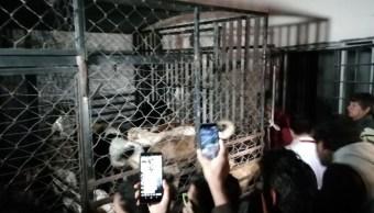 Foto: Mujer robaba perros y gatos en Puebla, 20 de septiembre de 2019, Puebla, México