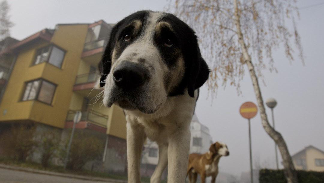 Paises-Bajos-perros-callejeros-esterilizacion-CNVR