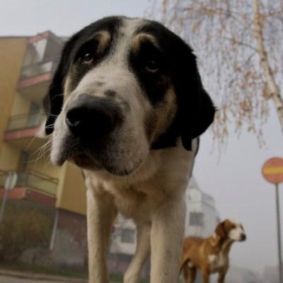 Países Bajos: el primer país sin perros callejeros, ¿cómo lo lograron?