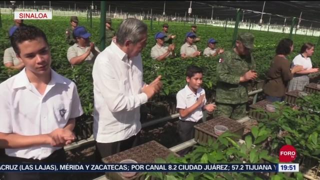 FOTO: Reforestarán municipios de Sinaloa, 14 septiembre 2019