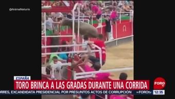 Toro brinca gradas durante corrida en España, hay 19 heridos