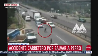 FOTO: Video Tráiler Embiste Autos Por Perrito