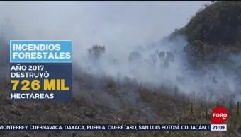 Foto: Incendios Forestales México Afectaciones 28 Octubre 2019