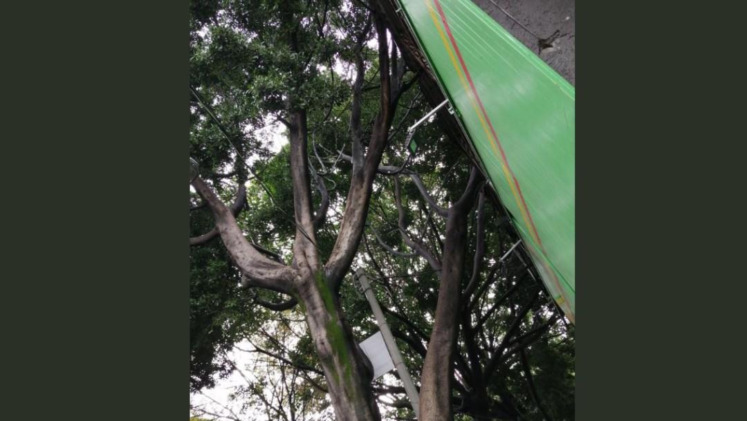 Foto: Cae árbol en el cruce del Eje 7 Sur Municipio Libre y calle Rumanía, 18 octubre 2019