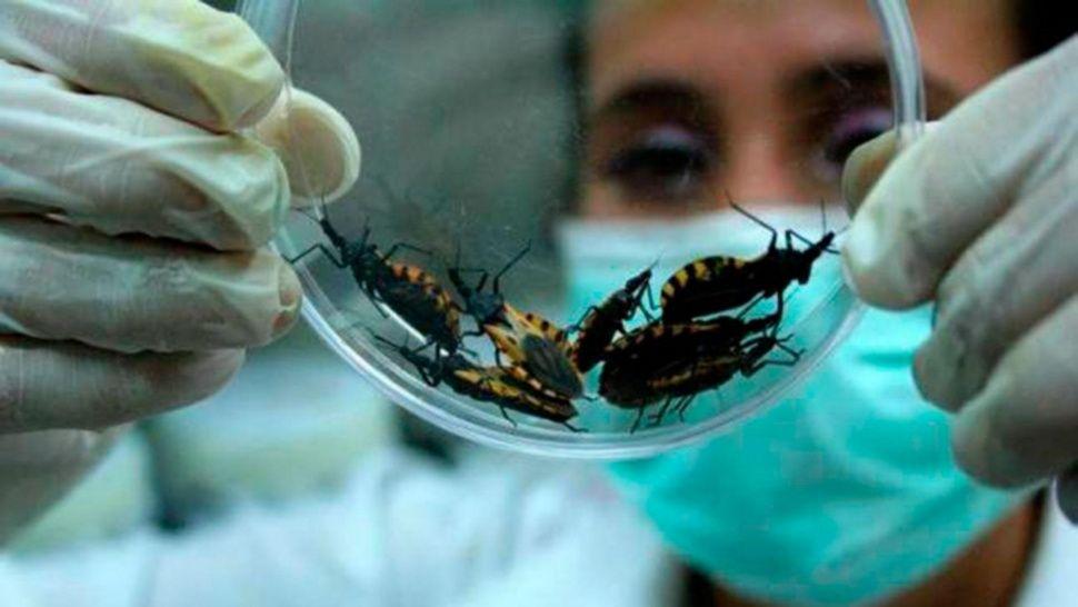 Foto: La enfermedad de chagas es Ocasionada por el parásito Trypanosoma cruzi, 11 de octubre de 2019, (OMS)