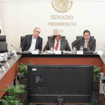 Avanza en el Senado terna de AMLO para presidir la CRE