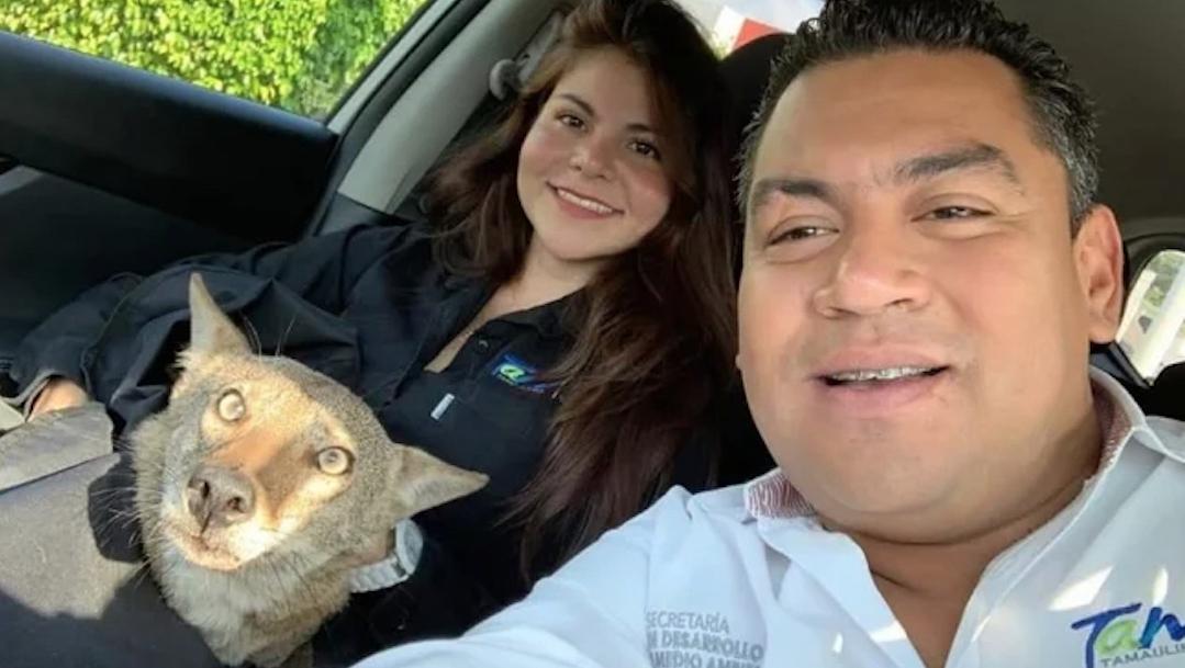 Confunden-Coyote-Perro-callejero-rescate-animal-Tamaulipas