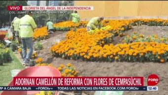 Flores de cempasúchil adornan camellón central de Reforma, en CDMX