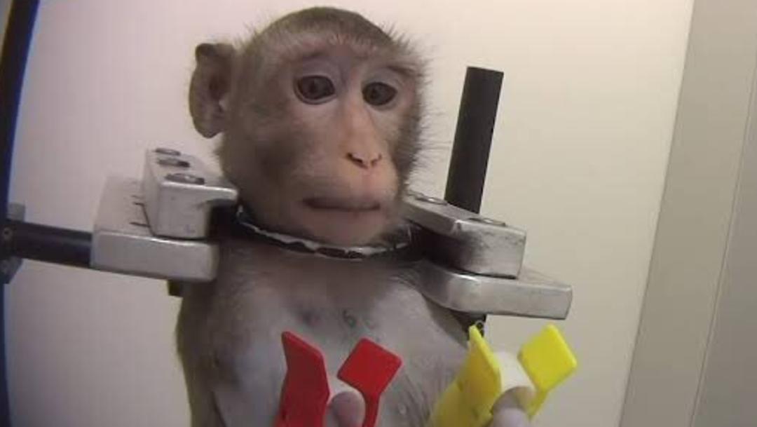 Foto: Las imágenes muestran prácticas de tortura a las que son sometidos los animales en el lugar, 16 de octubre de 2019 (Twitter @gallinafiedler1)