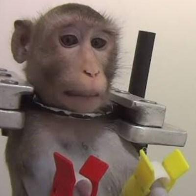 Imágenes filtradas evidencian tortura y maltrato animal en laboratorio de Alemania