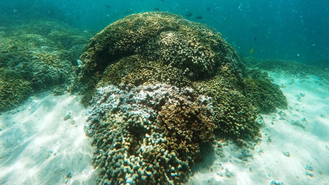 Foto: Investigadores chinos descubren nuevo insecto marino, 26 de octubre de 2015