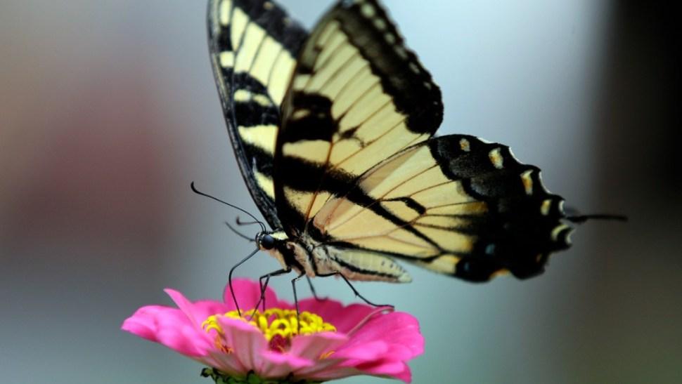 Foto: La extinción de los insectos: En 100 años no habrá ninguno, 16 de agosto de 2019, Estados Unidos