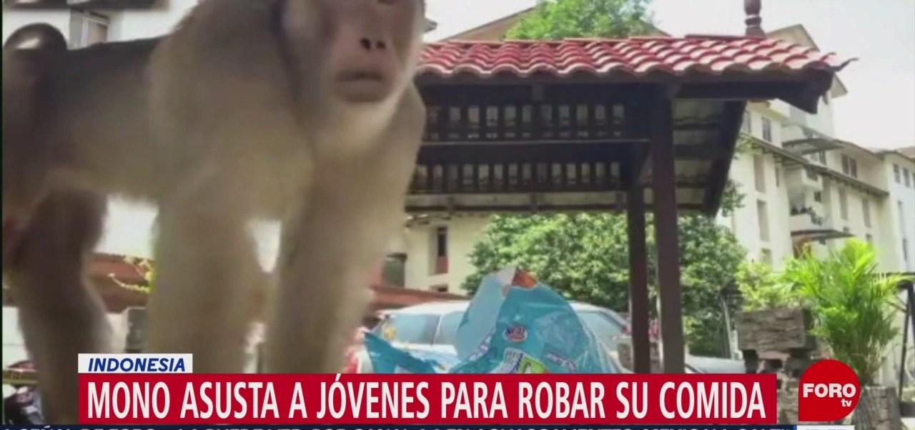 FOTO: Video Mono roba comida mujeres