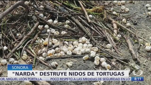 'Narda' provoca olas que afectaron miles de nidos de tortuga