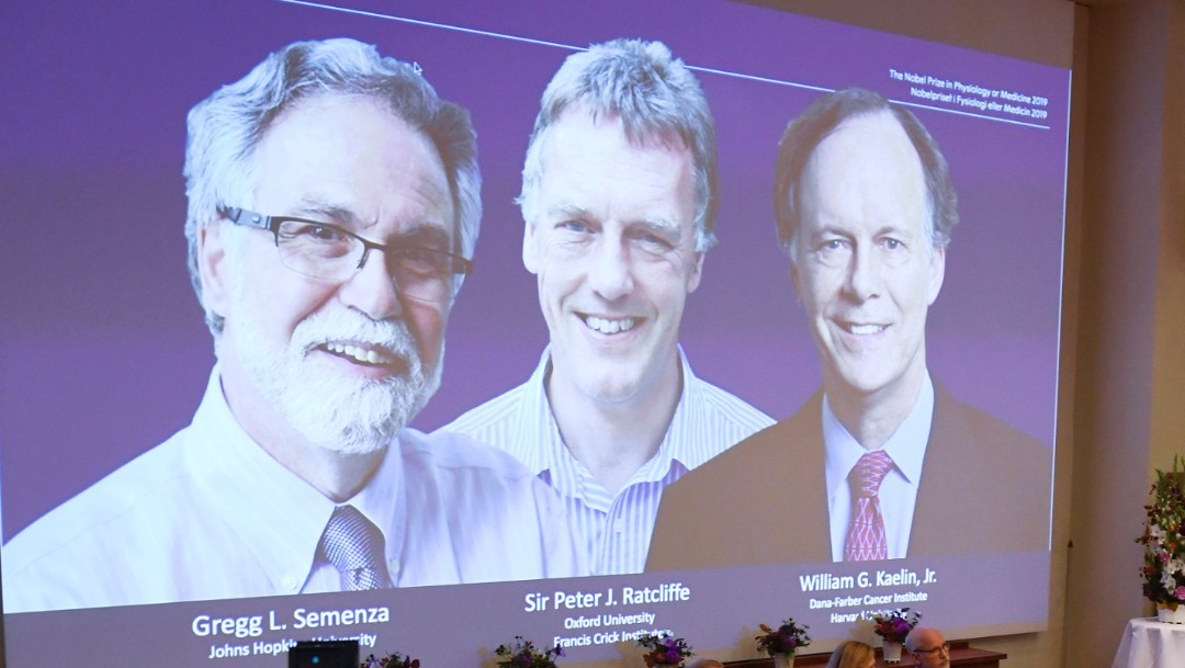 Foto: William G. Kaelin,y Gregg L. Semenza y Peter J. Ratcliffe, 7 de octubre de 2019