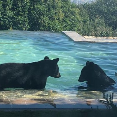 Video: Captan osos 'paseando' en San Pedro, Nuevo León