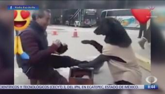 Perrito se hace viral por buscar boleador para sus patas