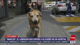 Perro labrador espera a su dueño afuera de hospital en Colombia