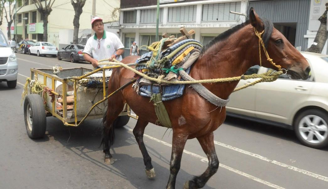 Animales-tiro-caballos-carretones-Nuevo-Leon