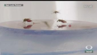FOTO: Primera Muerte Por Dengue SLP