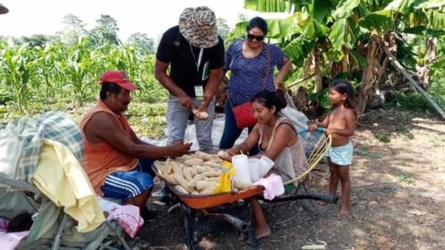 Foto: Campesinos en México, programa 'Sembrando Vida'