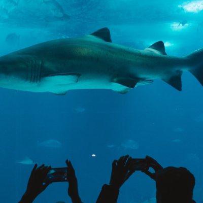 Video: Un tiburón se come a otro frente a asistentes de un acuario