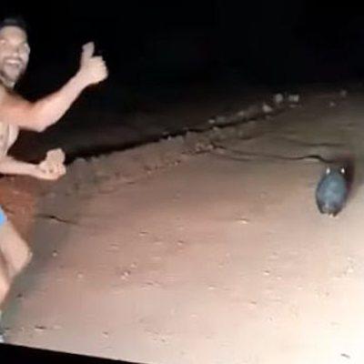 Policía fuera de servicio mata a pedradas a un wombat y lo capta en video