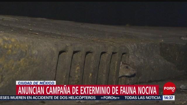 FOTO: Anuncian campaña exterminio fauna nociva,