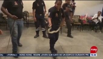 FOTO: Aumentan ataques víboras Oaxaca,