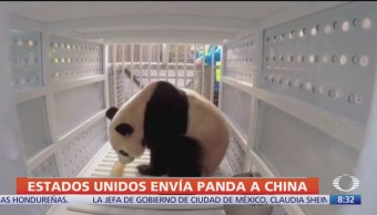 Avión traslada al panda gigante Bei Bei de Washington a China