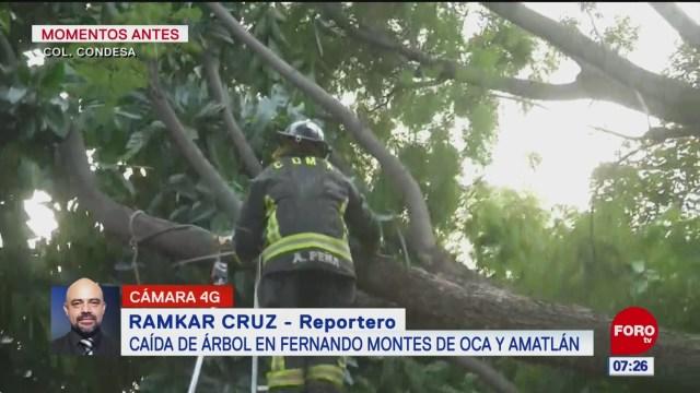 Cae árbol en calles de la colonia Condesa, en CDMX