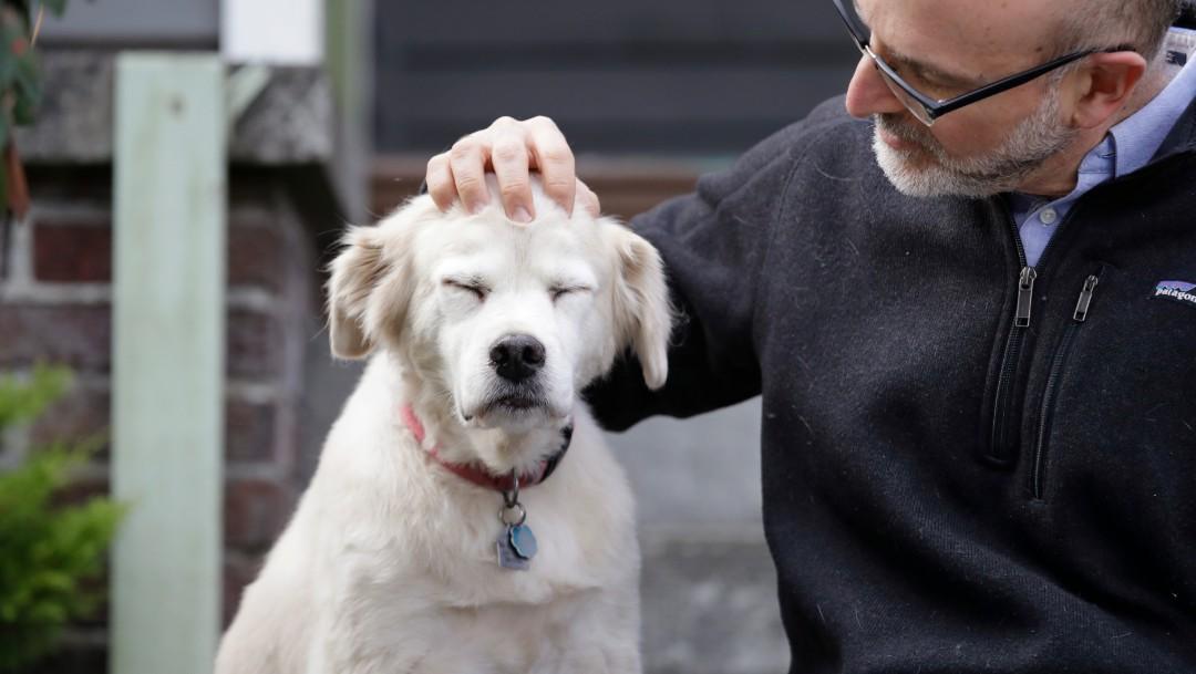Se buscan a 10 mil perros para estudio sobre envejecimiento