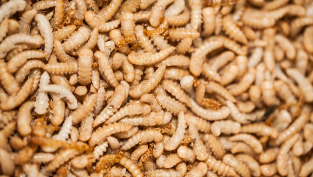 """Imagen: El llamado """"apocalipsis inadvertido"""" muestra que la tasa de extinción de estos insectos es ocho veces más rápida que la de los mamíferos, aves y reptiles, 16 de noviembre de 2019 (Getty Images, archivo)"""
