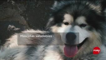 FOTO: Enfermedades que pueden transmitir las mascotas, 10 noviembre 2019