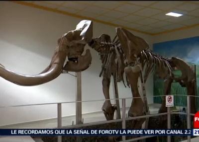 Exhibirán huesos de mamut hallados en Tultepec
