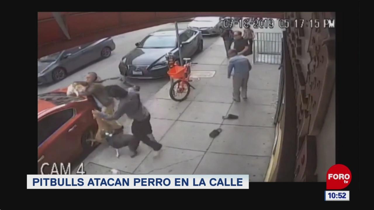 Foto: Ataque de pitbulls