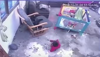 Foto Gato reacciona y salva a bebé de caer por la escalera 8 noviembre 2019