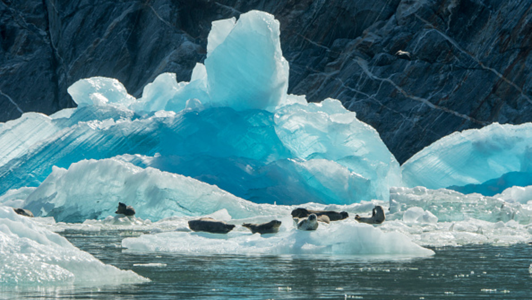 Foto: Protegerán hábitat de focas amenazadas en Alaska, 29 de noviembre de 2019 (EFE)