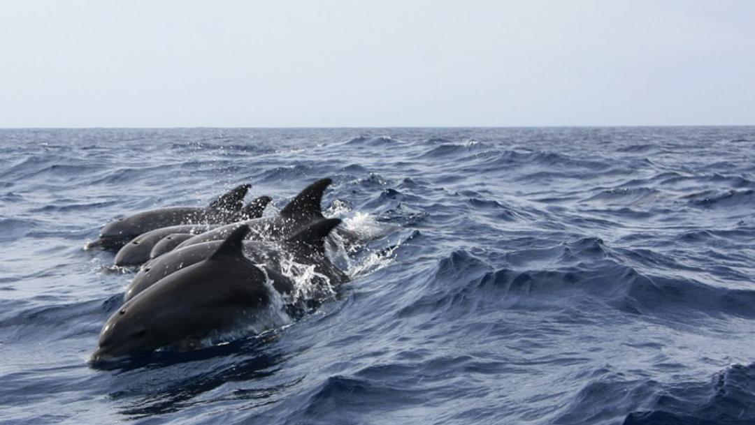 Video: Captan masacre de delfines por cacería en Japón